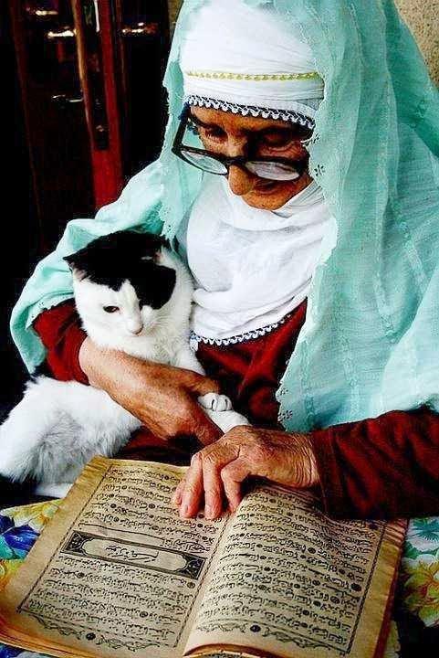 Quali bisogni potrà avere questo gatto lettore?
