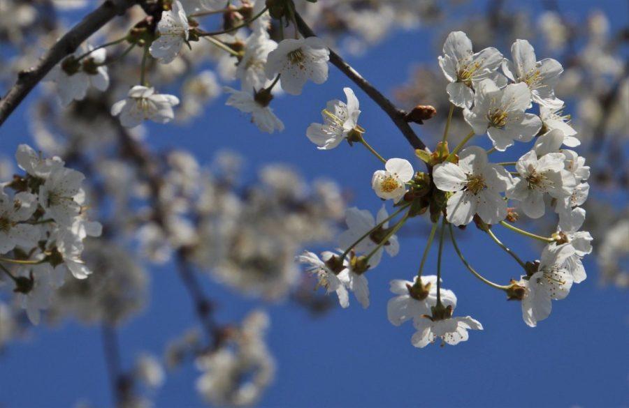 I fiori di marzo accompagnano le novità su Amazon KDP.