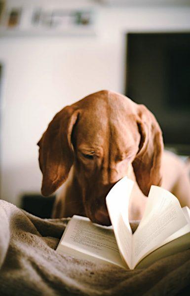 Che tipo di lettore sarà questo cane?